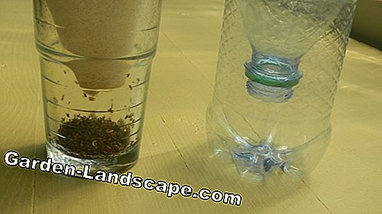 Home remedies: Fly catcher make yourself