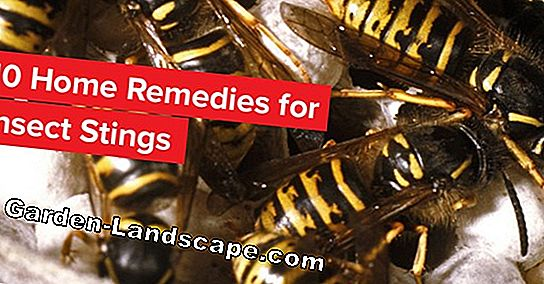 Wasp destruction: Use home remedies & baits