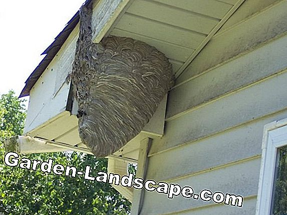 Wasps in winter - how to deal with old wasp nests?