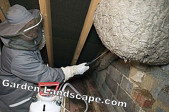 Remove wasp nest in the roof and attic