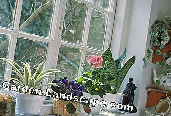 Houseplants and plants in winter - tips