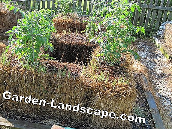 Straw mats as winter protection for garden and container plants