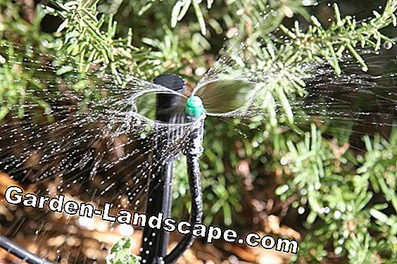Install drip irrigation for potted plants