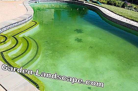 Algae in the pool - Causes & Tips to combat