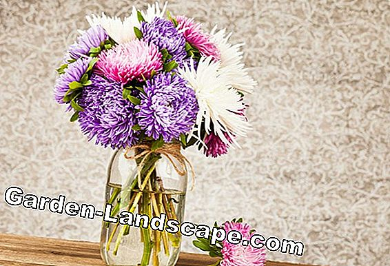 Cut cut flowers - longer fresh flowers