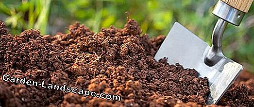 Fertilizer - Fertilizer - Fertilizer