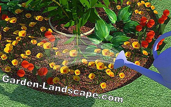 Create flowerbed properly - design and planting