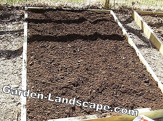 Garden peat: Use peat in garden and vegetable patch - yes or no?