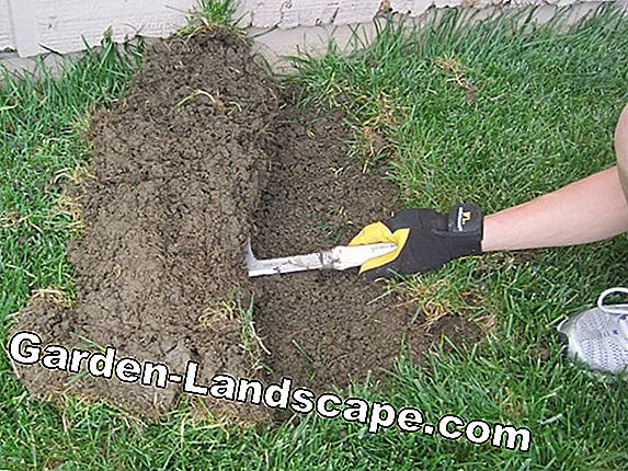 Ditch garden: necessary or not?