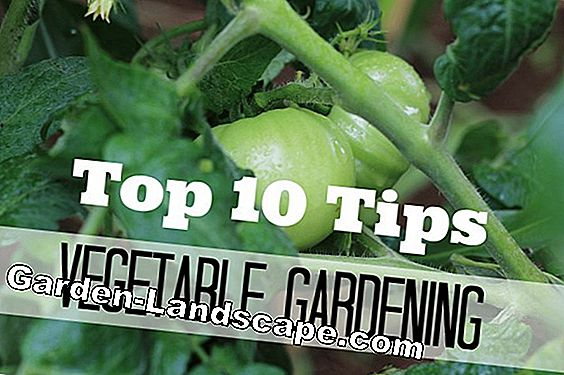 Gardening tips - Tips for the garden
