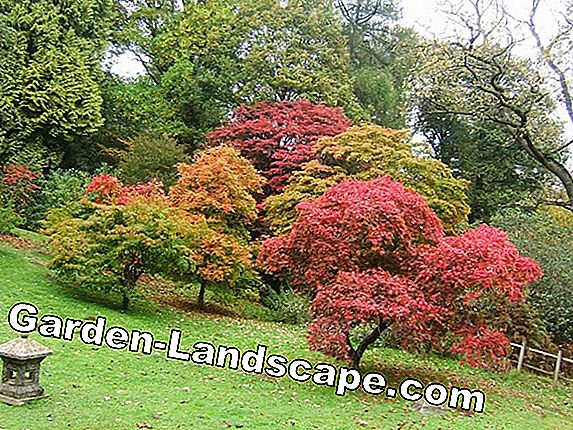 Gardening in October - tips for gardening in the fall