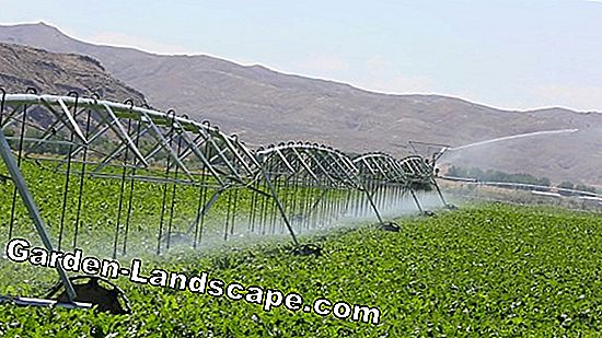 Holiday Irrigation - Irrigate plants with wool thread
