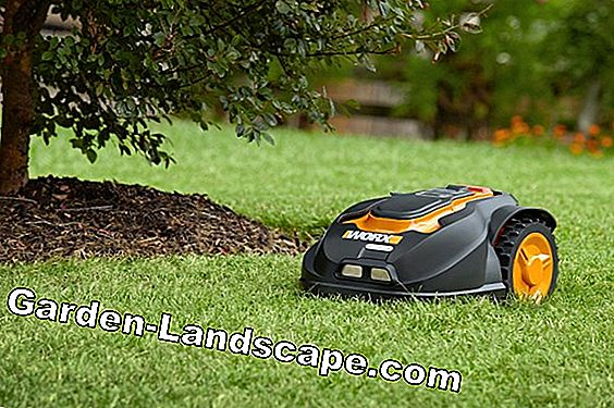 Lawn mowing on a slope too difficult? - 5 alternatives presented!