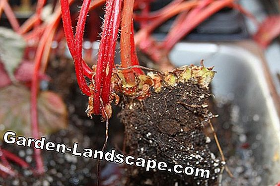 Mold on potting soil - prevent and remove