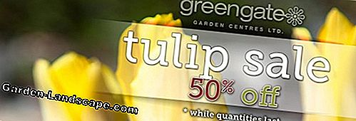 Are tulips poisonous? Information about tulip leaves and flowers