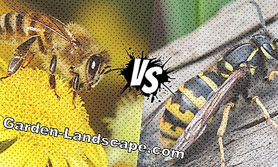 Wasps - fight / control wasps or fight !?