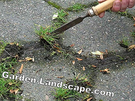 Destroy weeds in the garden / lawn without chemicals - how it works!