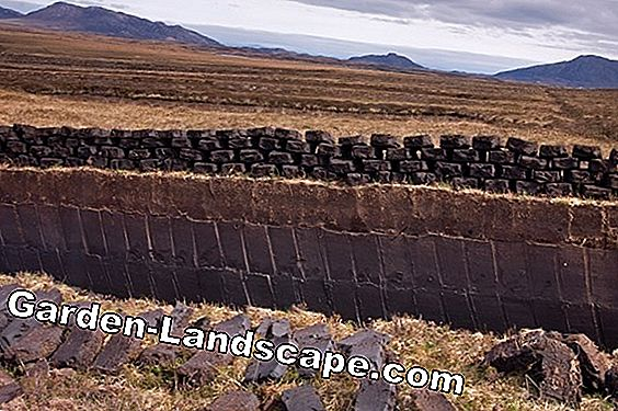 White peat - characteristics, prices and order possibility