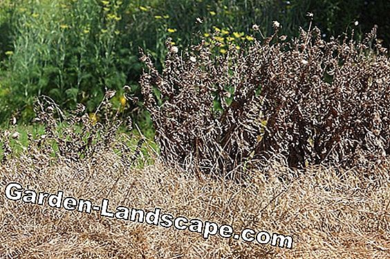 What are herbicides - weed control