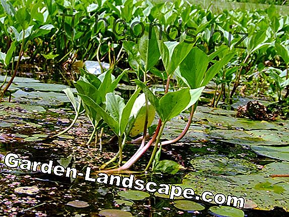 11-Step guide to pond planting