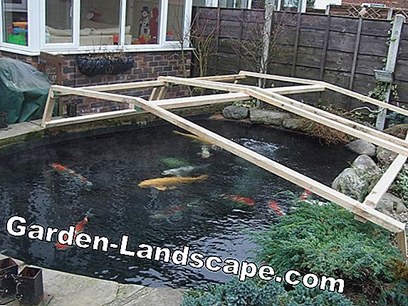 5 Tips for clear water in the garden pond