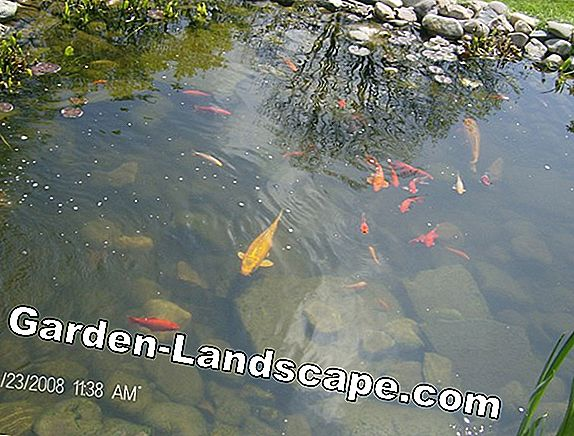 Garden pond: required size + depth for fish - goldfish