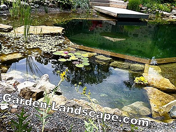 Ideas for shore design at the garden pond, pond
