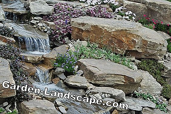 Create and plant a natural pond - how it works!