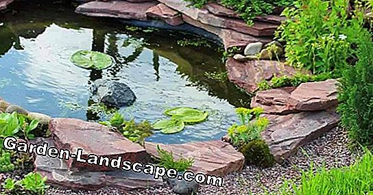 Pond Care: The best tips for more enjoyment of the garden pond