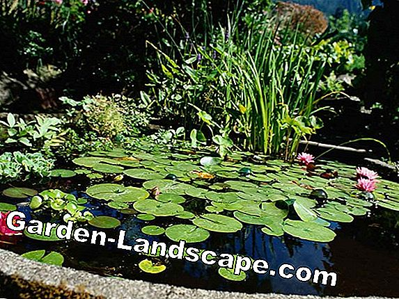 Cleaning the pond, cleaning the garden pond - Tips for pond care