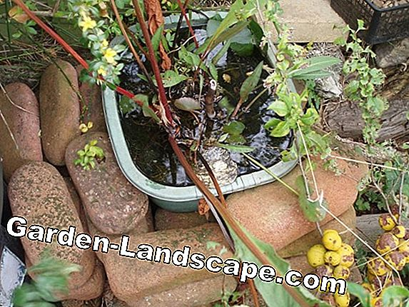 Install and plant the pond bowl - DIY instructions