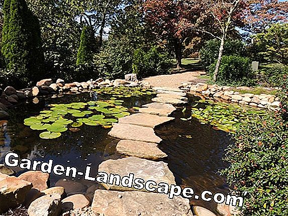 Pond lighting - ideas for garden pond lighting