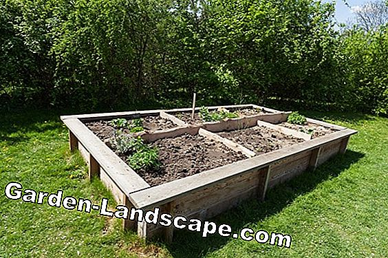 Install the pond tub yourself and plant properly