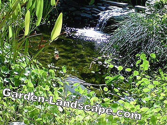 Tips for garden pond care during the year