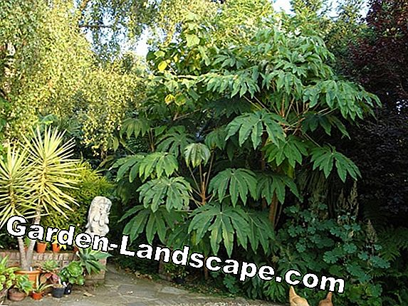 5 Hardy plants for the jungle garden