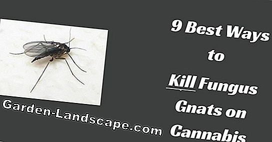 5 Tips for weed control without