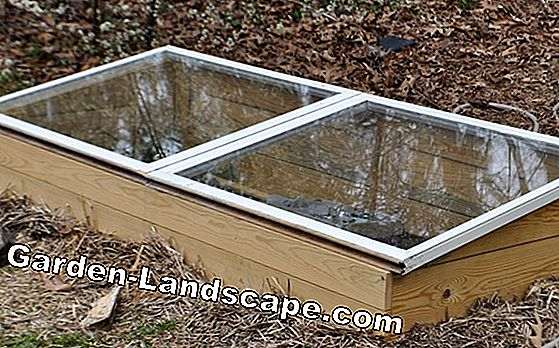 Build and plant a cold frame