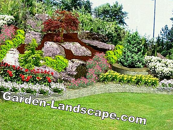 Gardening on the hillside