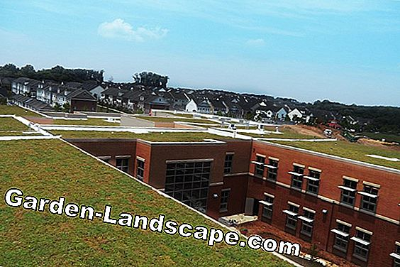 Green roofs: plant, care and costs