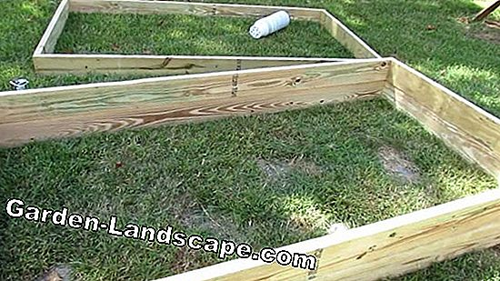 Vegetable growing in wooden frame beds
