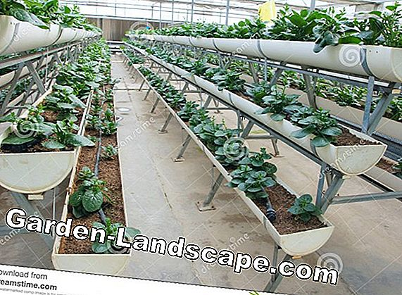 Vegetable cultivation without Schneckenfrust