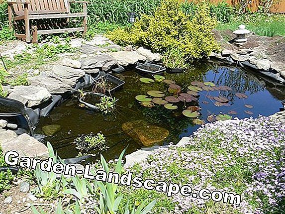 Create natural ponds properly