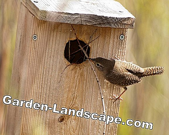 A nesting hole for the wren