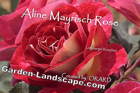 New roses with ADR-predicate
