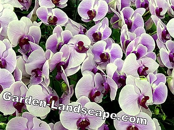 Churning orchids