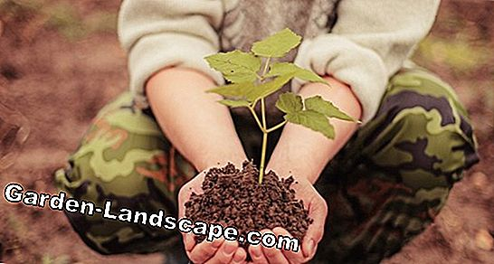 Potted plants: 5 tips for the perfect start of the season