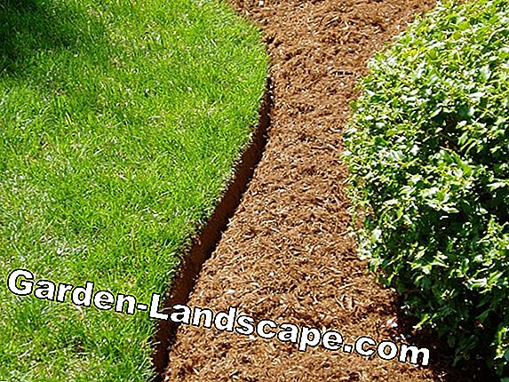 Tips for a low-maintenance lawn edge