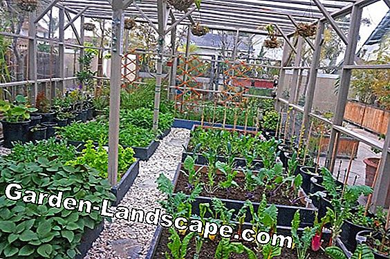 Organize vegetable garden organically