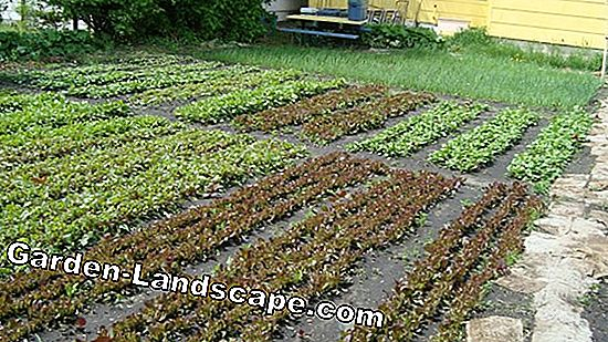 Vegetable cultivation: Big crop on a small area