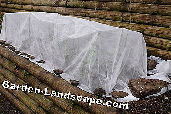 Winter protection for pot plants